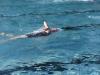 triathlon-wertingen-2015-049